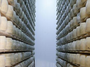 Avrupa'nın marka peynirleri Antalya'da üretiliyor
