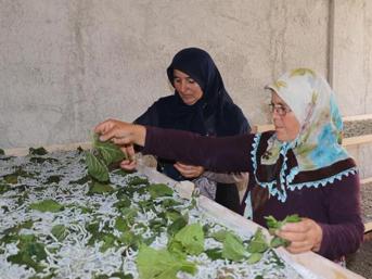 Devlet destek oldu, 2 ev kadını ipek böceği yetiştirmeye başladı