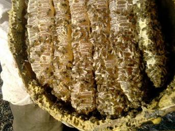 Dünyaca ünlü Anzer Balı'nda  rekor üretim