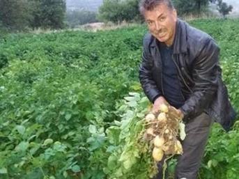 Türkiye'nin ilk beyaz patates hasadı yapılacak