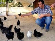 Süs tavuklarını hobi olarak aldı, çiftlik kurdu