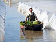 Sel suları altında kalan seralarda sandallarla hasat