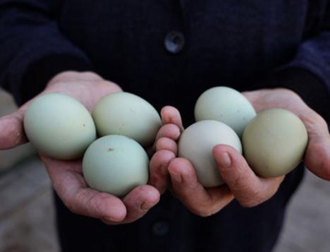 Bıldırcın yumurtası 'out', yeşil yumurta 'in'