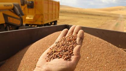 Türkiye Ziraat Odaları Birliği (TZOB) Genel Başkanı Şemsi Bayraktar, mercimekte üreticinin yeterince kazanamadığını, mahsul elinde kalabildiğini, maliyetinin altında satabildiğini, böyle olunca ekimden kaçındığını, ekim alanları ve üretimin düştüğünü bildirdi.