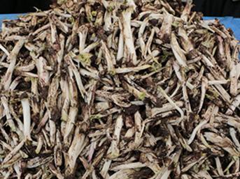 Kenger sakızının kilosu 600 TL'den satılıyor