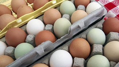 Gıda, Tarım ve Hayvancılık Bakanlığı, Avrupa'da baş gösteren ilaçlı yumurta krizine yönelik izleme çalışması başlattı. Bu çerçevede Türkiye'de üretilen yumurtalar da analiz edilecek.