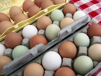 Fransa'da böcek ilaçlı yumurta skandalı