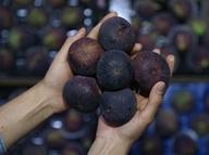 Bursa siyahındaki ihracat 10 bin tona yaklaştı