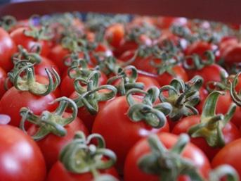 Rusya'ya domates ihracatı 1 Aralık'ta başlıyor