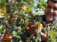 Rüyasında gördü, o meyveden 250 ton üretti