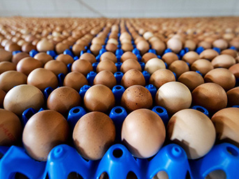 Yumurtaya 'yetiştirme şekli' damgası