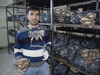 Elazığ'ın Palu ilçesinde yaşayan Ayhan Özmen, evinin banyosunda kültür mantarı yetiştirmeyi denedi. Bunu işe dönüştürmeye karar veren Özmen, üretimi bakanlıktan aldığı 40 bin TL hibe desteğiyle kurduğu serada sürdürüyor.