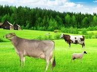İşte Çiftlik Bank benzeri 11 girişim!