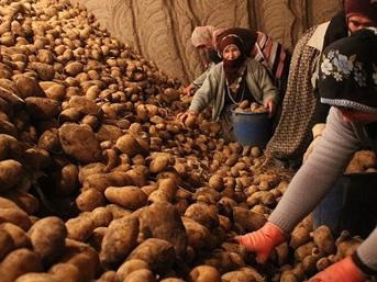 Türkiye Ziraat Odaları Birliği'den 'patates yiyin' uyarısı