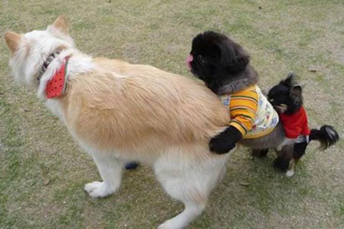 İşte internetin en komik fotoğrafları...