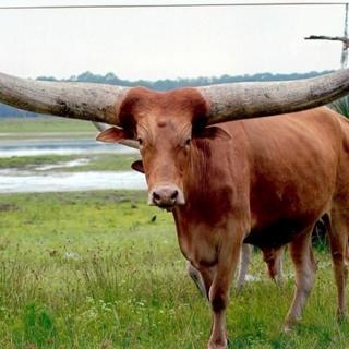 Varlığından habersiz olduğunuz hayvanlar