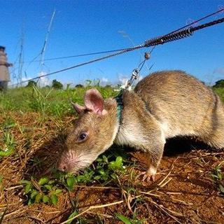 Bilim dünyasını şaşırtan hayvan