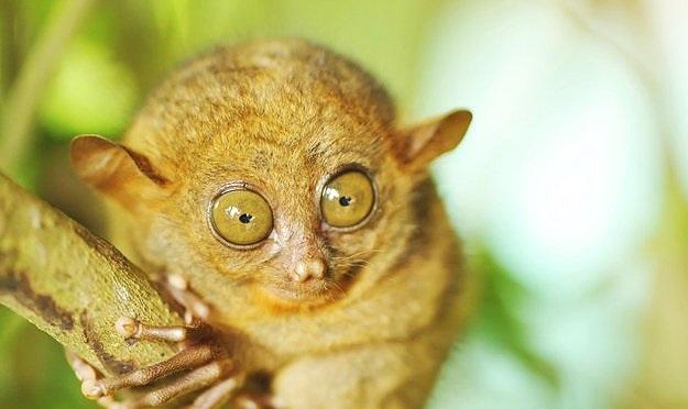 Dünyanın en bilinmedik hayvanları