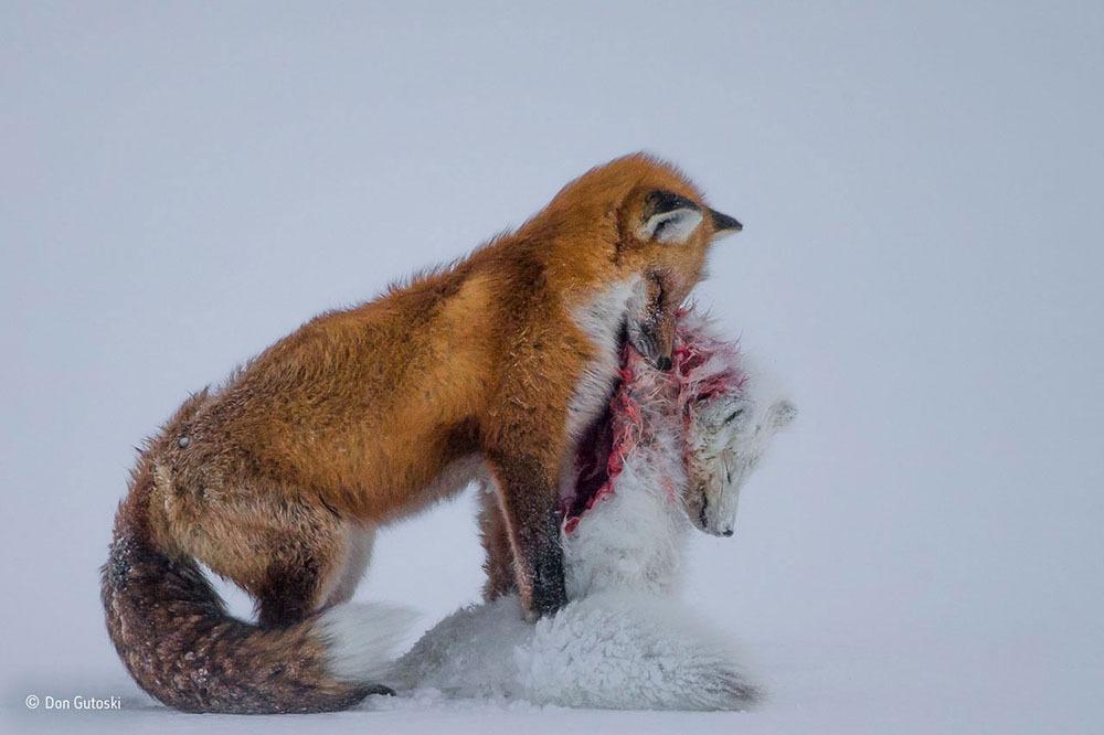 2015'in en iyi 10 vahşi hayat fotoğrafı
