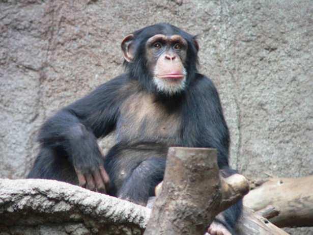 Hangi hayvan ne kadar yaşıyor?