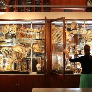 Dünyanın en geniş zooloji müzesi