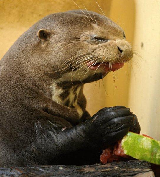 Yemek yemesi komik hayvanlar