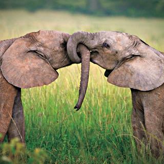 Hayvanlar da aşık olur