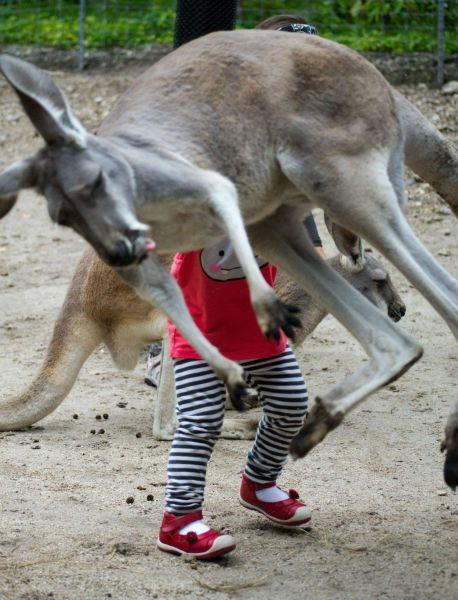 Hayvanlar aleminden komik fotoğraflar