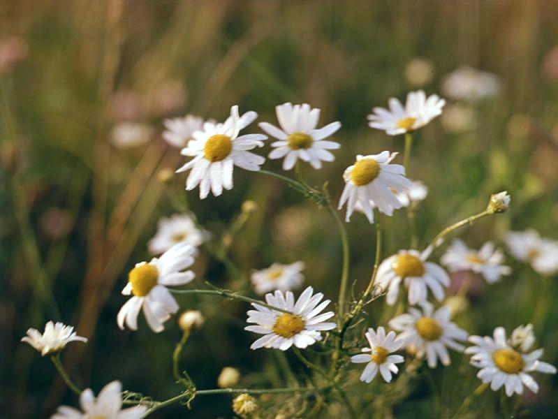 Bahar geldi: Çiçekler ne diyor?