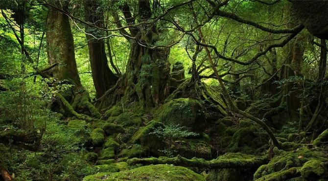 Dünya'nın gizemli ve olağanüstü 10 ormanı