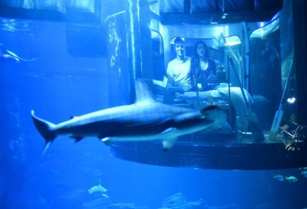 Geceyi köpekbalıklarıyla geçirdiler