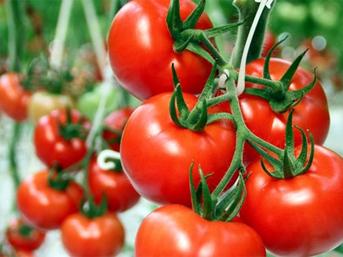 İsrail, Türkiye'den ithal edilecek domatesten vergi almayacak