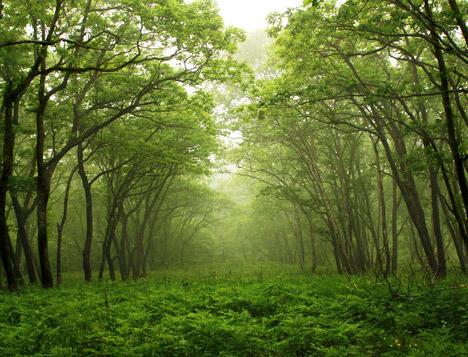 Yeryüzünde kaç tane ağaç olduğu açıklandı