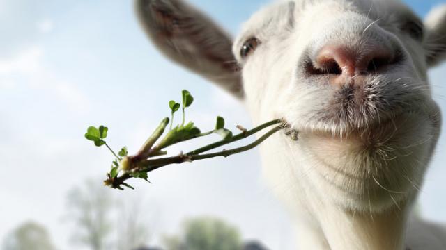 Keçi sütü inek sütünün yerini mi alıyor? İşte keçi sütünün faydaları