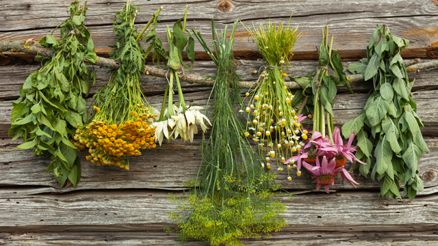 Hangi bitki neye iyi geliyor?