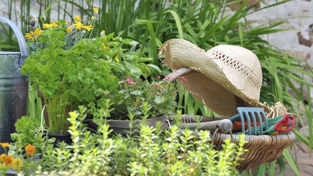 Bahçede Bahar Temizliği