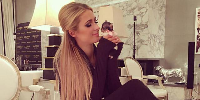 Paris Hilton minik köpeğine 25 bin TL ödedi