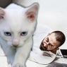 Cem Yılmaz: 'Para bitince kedi eti...'