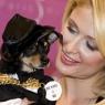 Paris Hilton köpeğini kaybetti