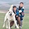 Ödüllü Türk filmi Selanik'te