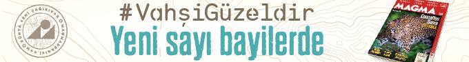 İstanbul Aşk Haritası