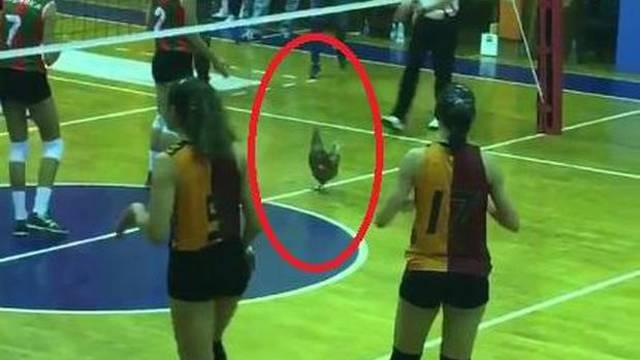 Galatasaray'ın maçında tavuk krizi