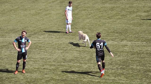 Tunceli'deki amatör maçta sahaya köpek girdi