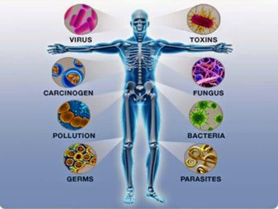 1. Bağışıklık sistemi